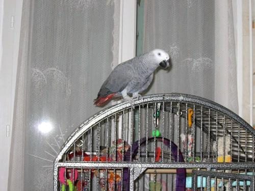 Yang sur sa cage