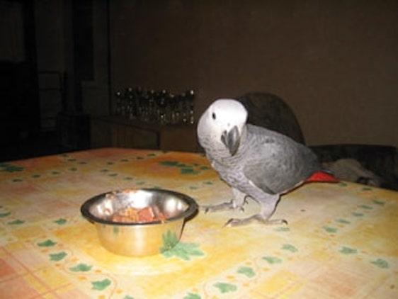 Yang veut la nourriture de Ninon